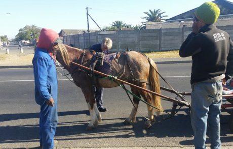 CHPA Monitoring Horses