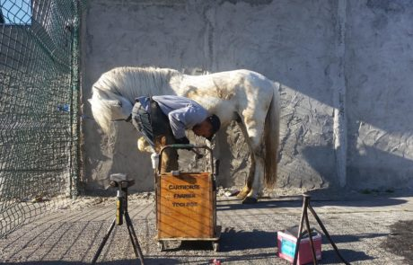 Cart-Horse-Protection