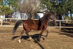 cart horse cape town adopt a horse